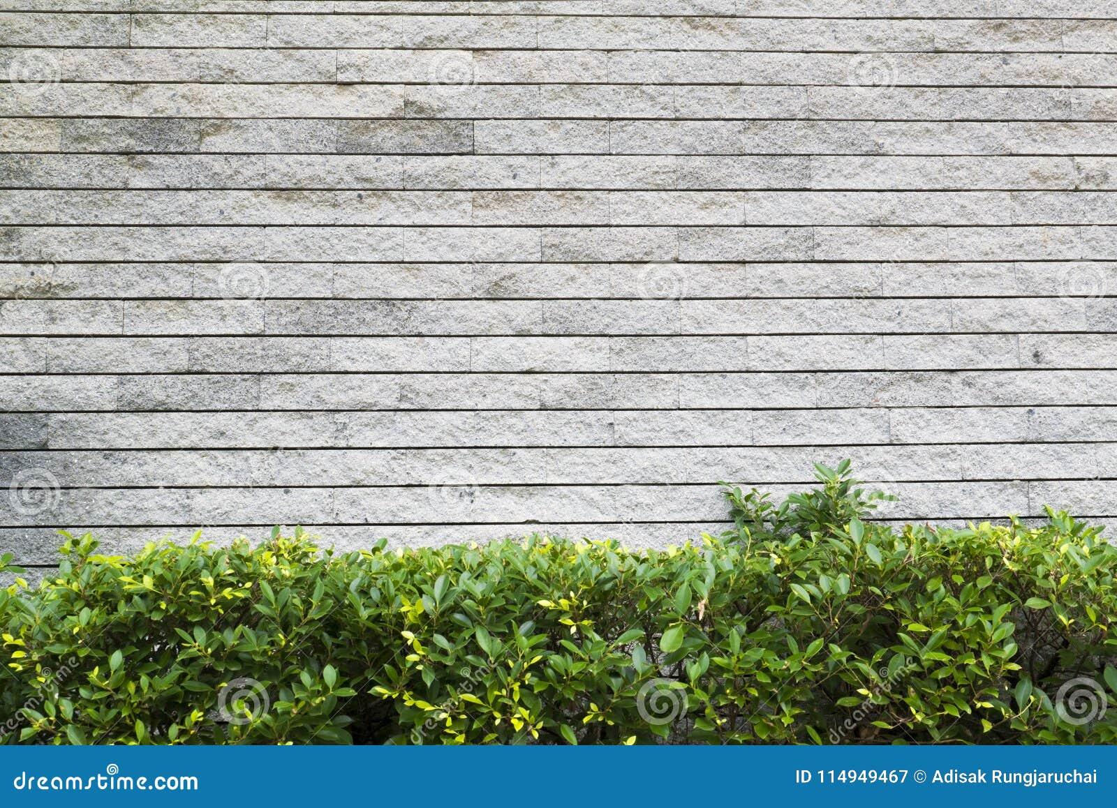 Il giardino verticale verde con il muro di mattoni grigio for Carta da parati muro mattoni