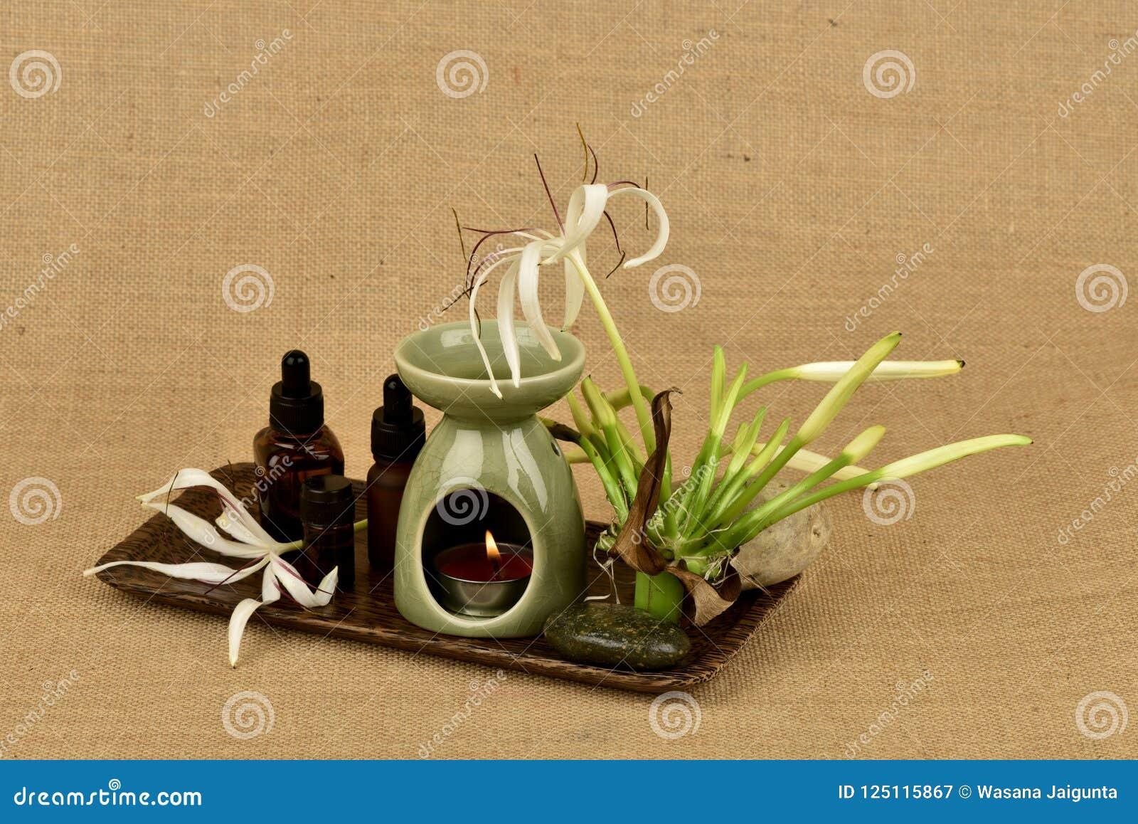 Il giglio di Crinum, i fiori e l olio essenziale hanno proprietà medicinali