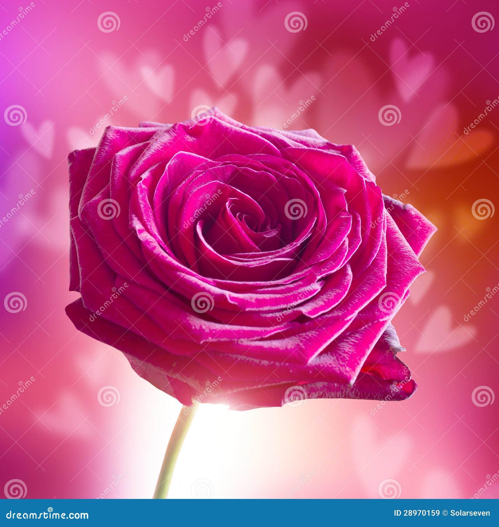 spesso Il Giorno Del Biglietto Di S. Valentino Rosa Con I Cuori Immagine  BB59