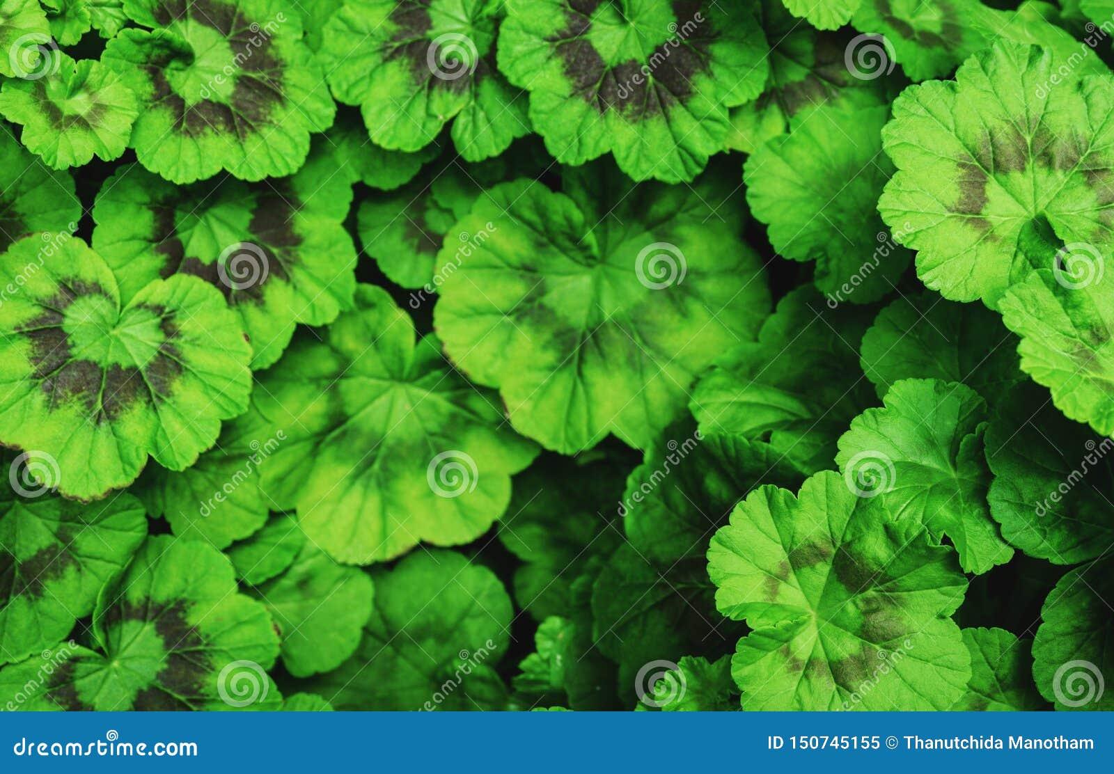 Il giro verde lascia il fondo Tono d annata Medio vago