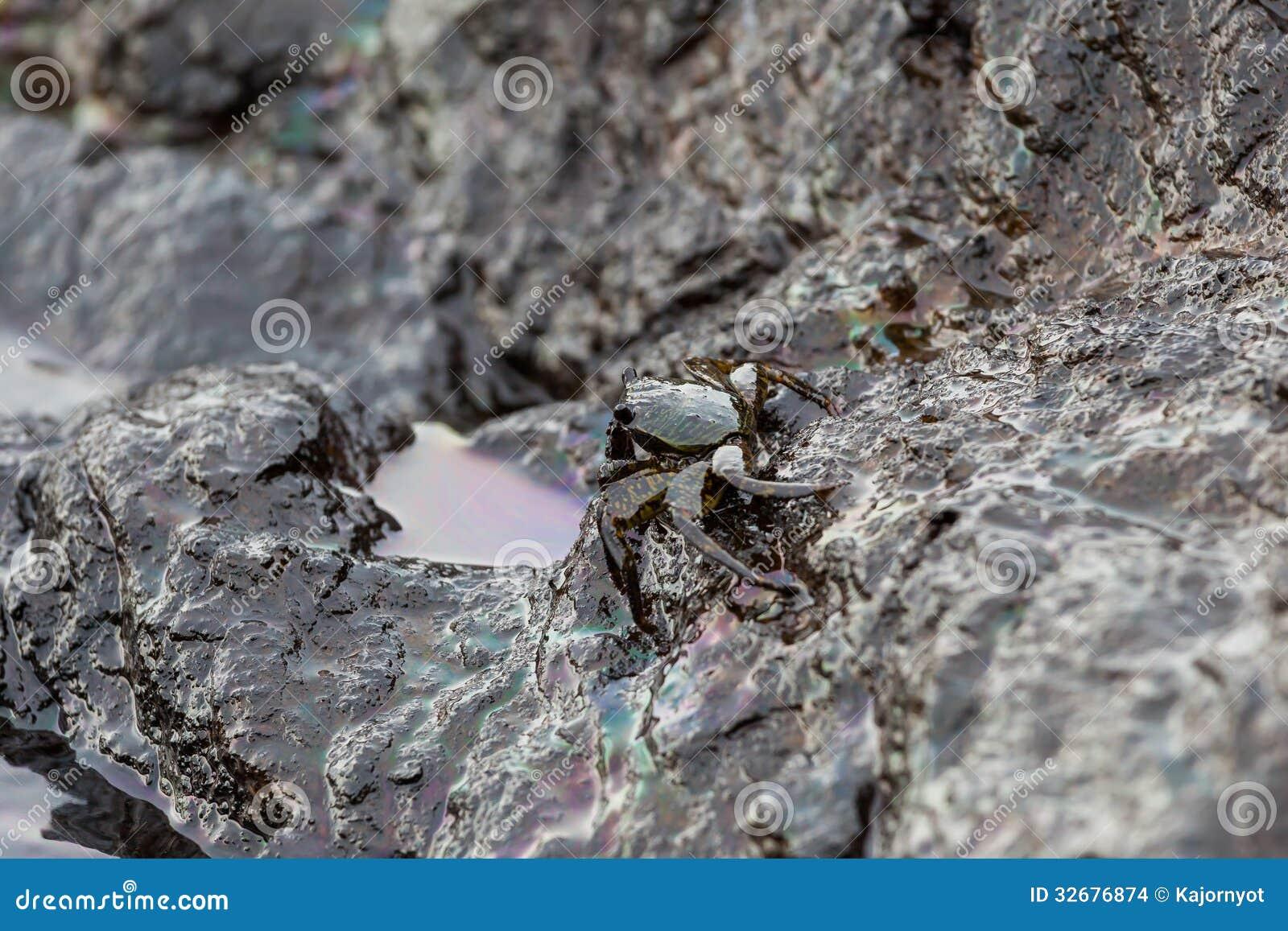 Il granchio era sporco con il petrolio greggio