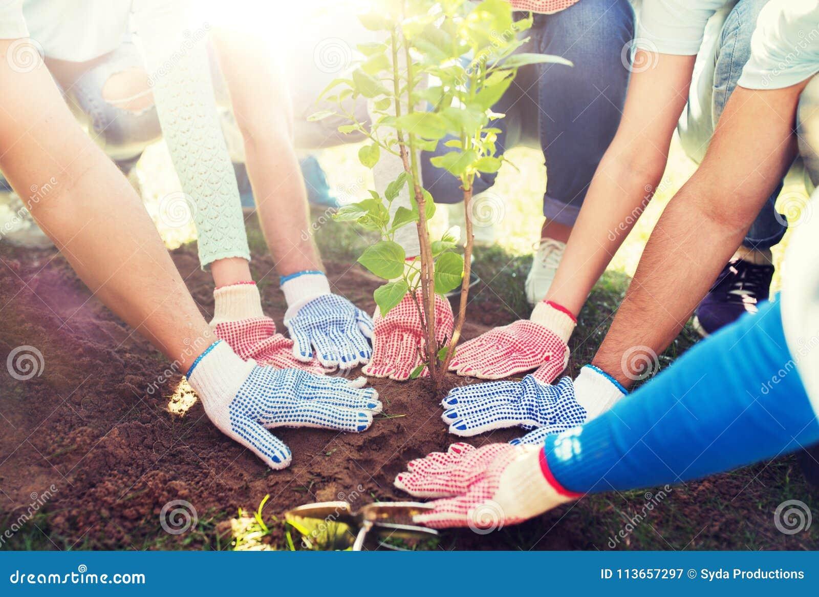 Il gruppo di volontari passa la piantatura dell albero in parco