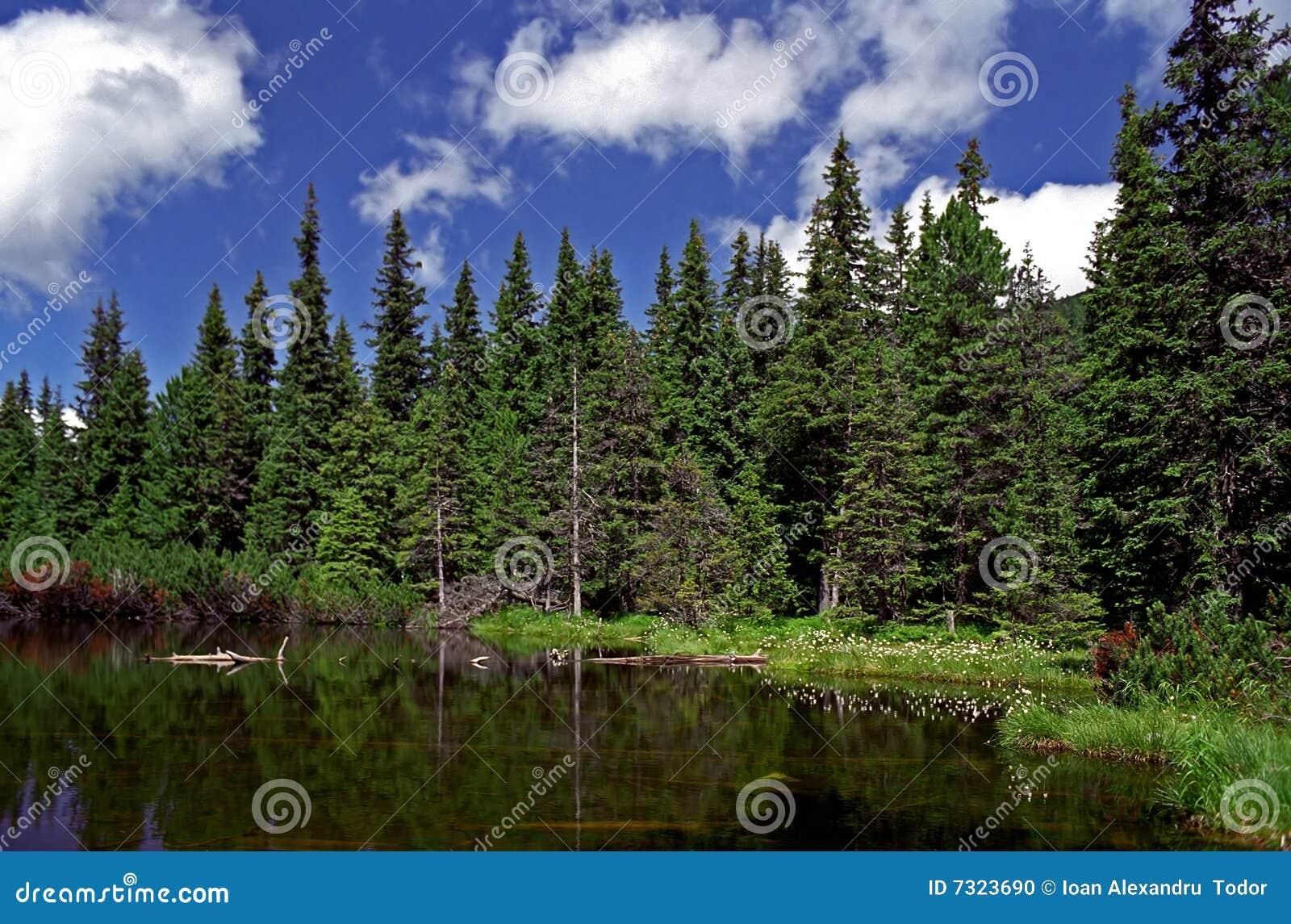 Il lago dalla foresta