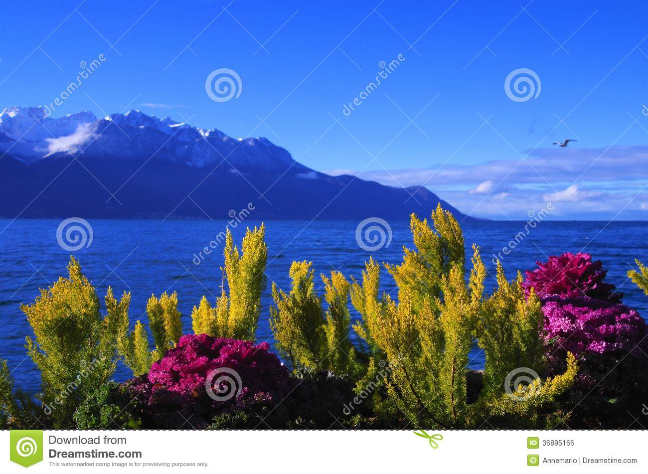 Download Il lago Lemano fotografia stock. Immagine di panorama - 36895166