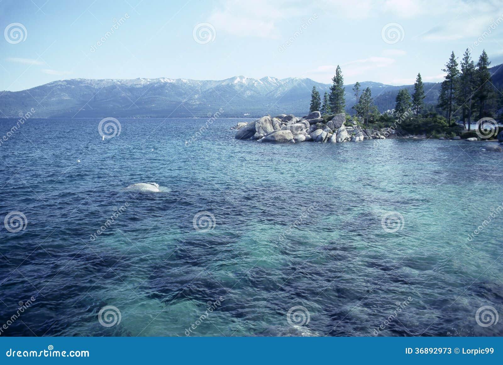 Download Il lago Tahoe immagine stock. Immagine di flora, roccie - 36892973