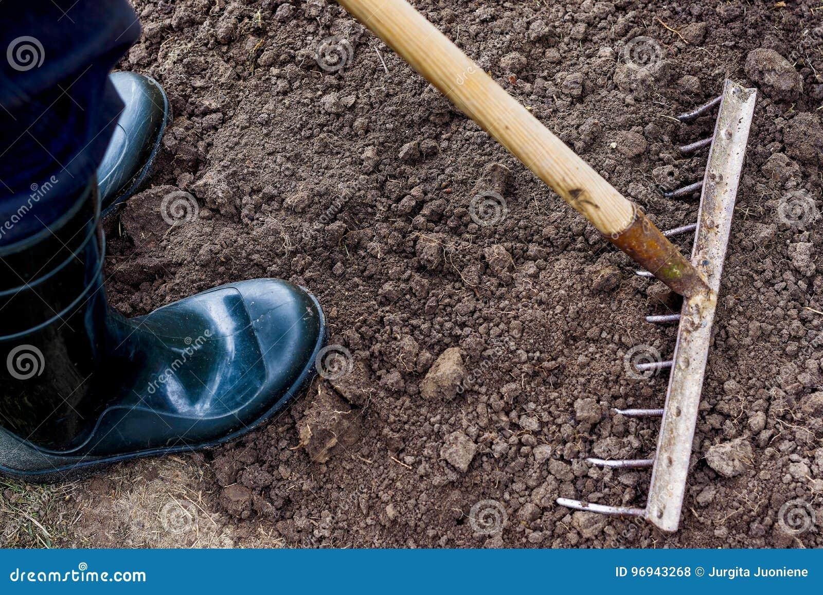 Il lavoratore sta rastrellando il suolo nero con il rastrello nell orto