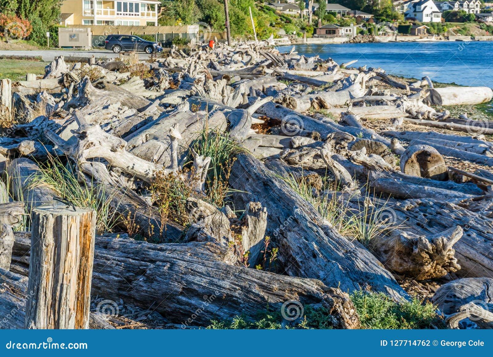 Il legname galleggiante della linea costiera accatasta 3