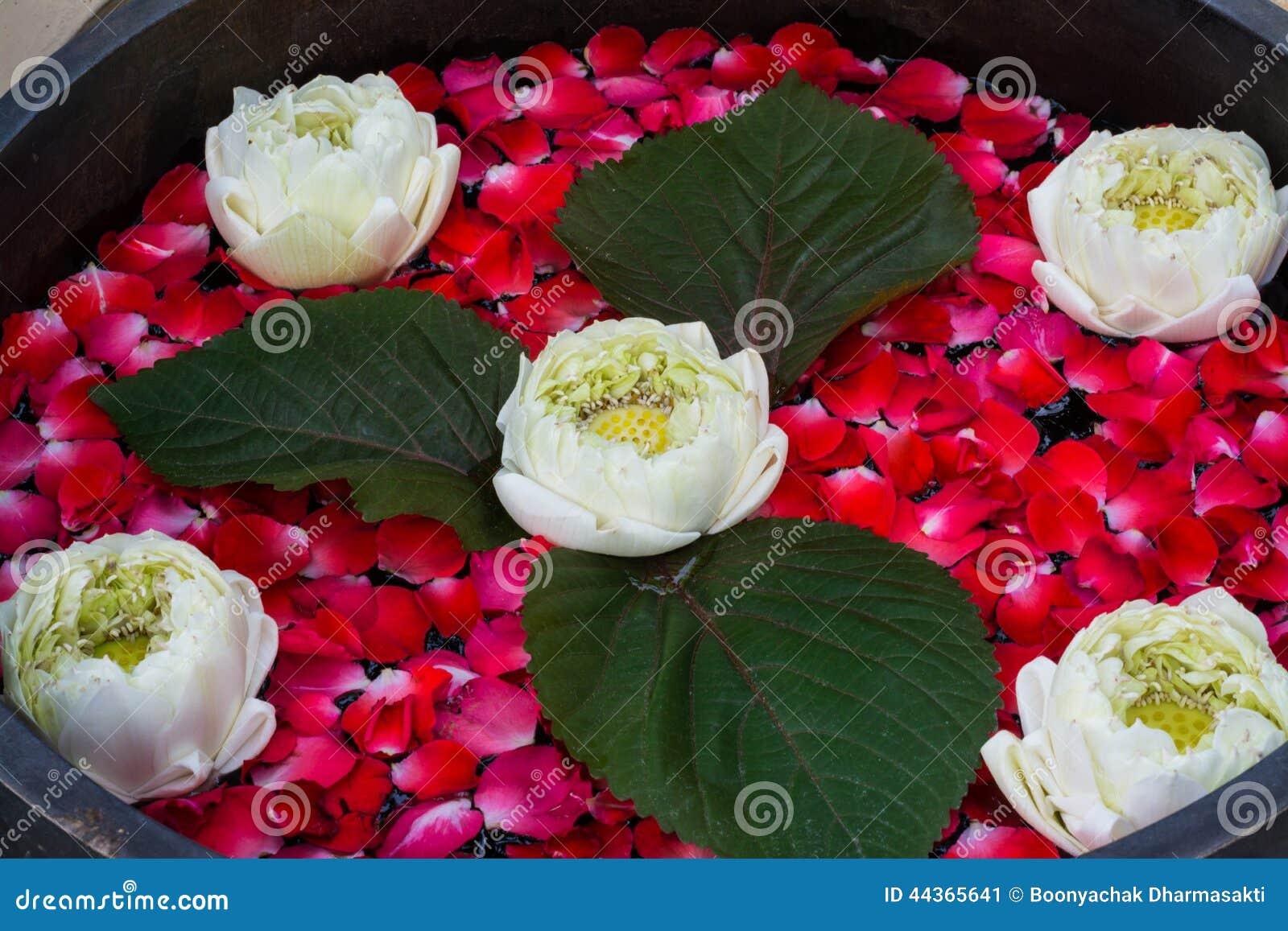 Il loto di galleggiamento con i petali di è aumentato