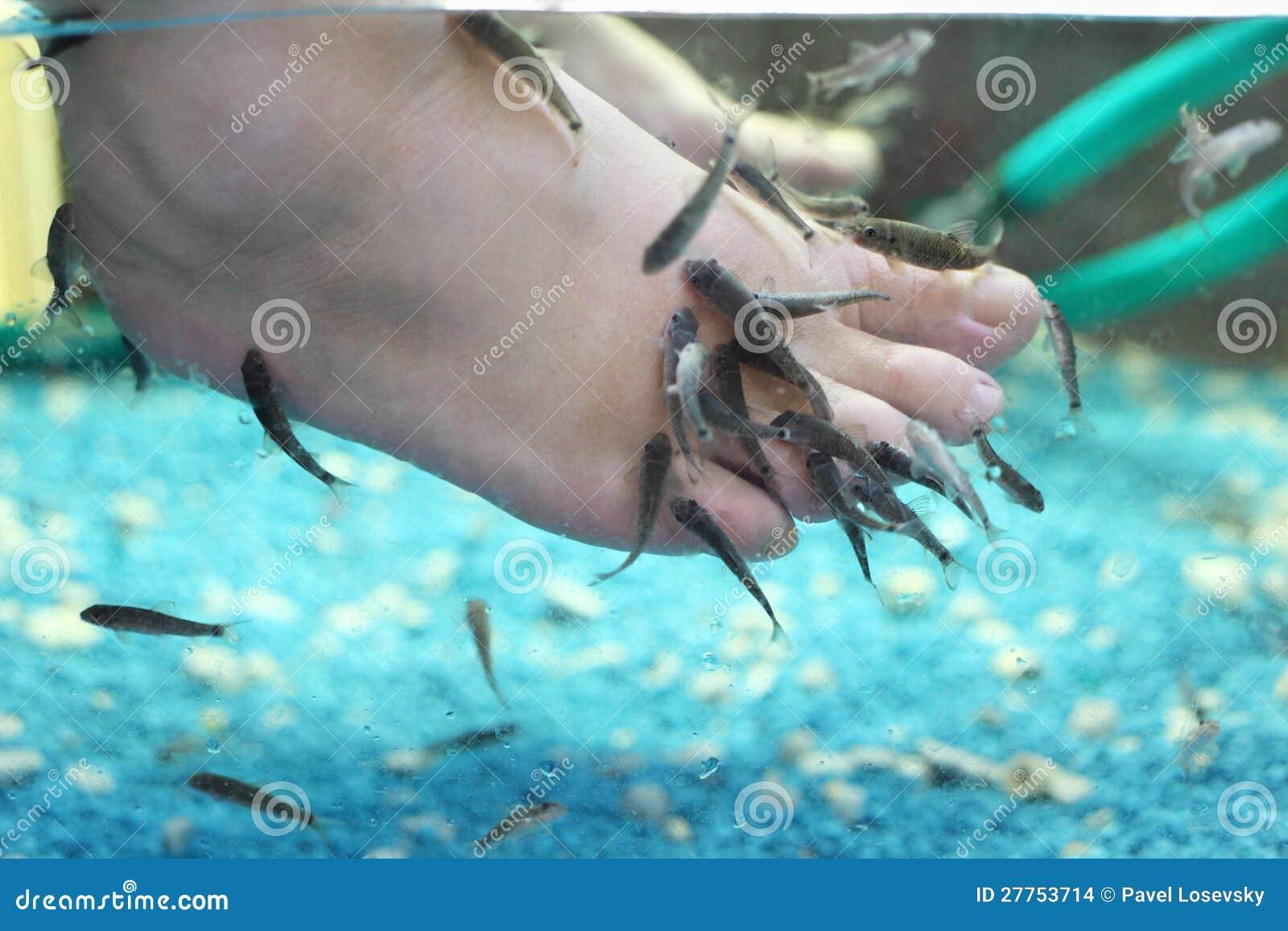 Il lotto di piccoli pesci mangia la vecchia pelle sui for Pesci acqua fredda piccoli