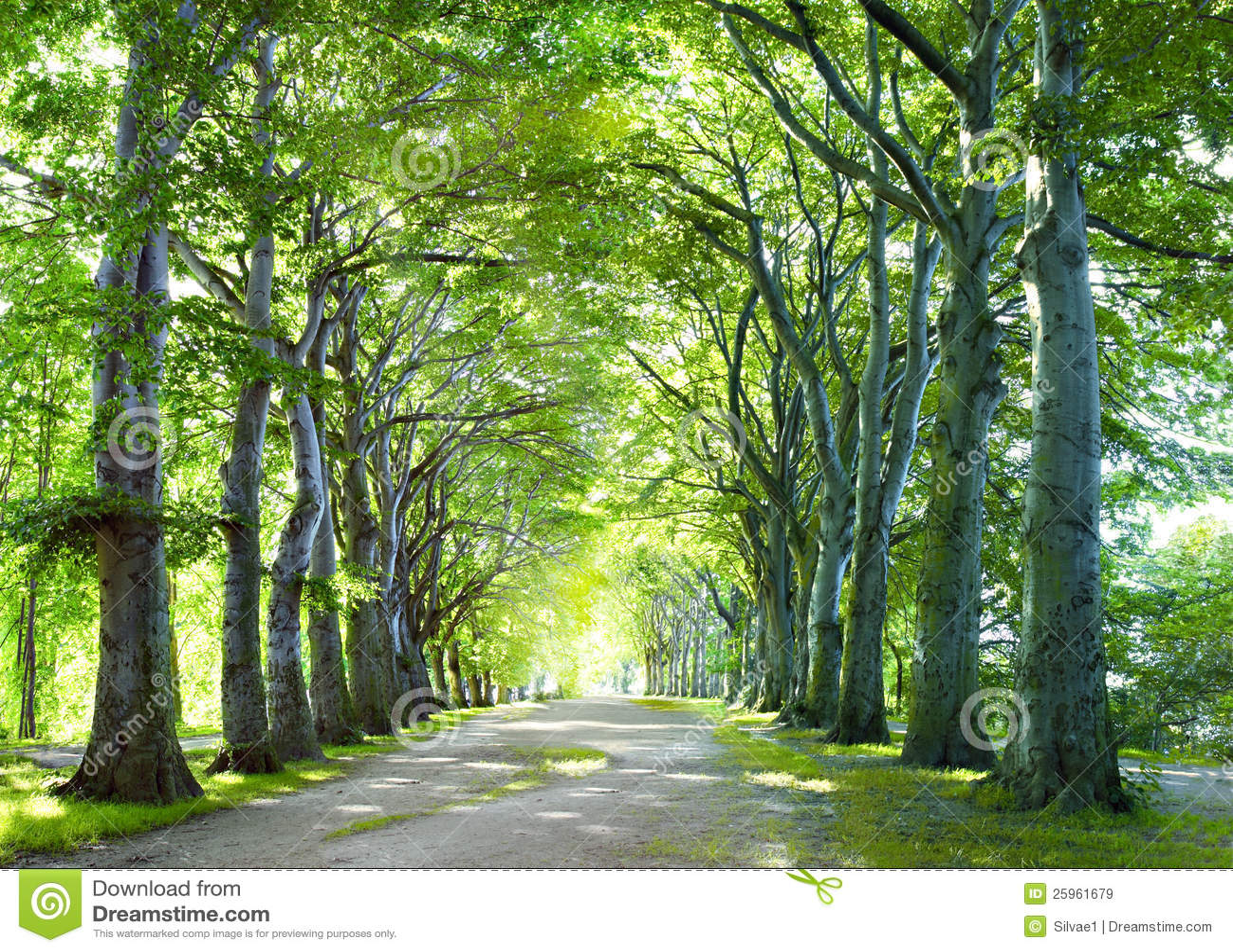 Il modo in foresta