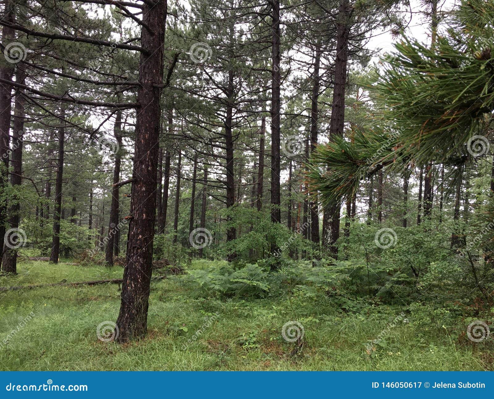 Il mondo delle foreste verdi e fresche