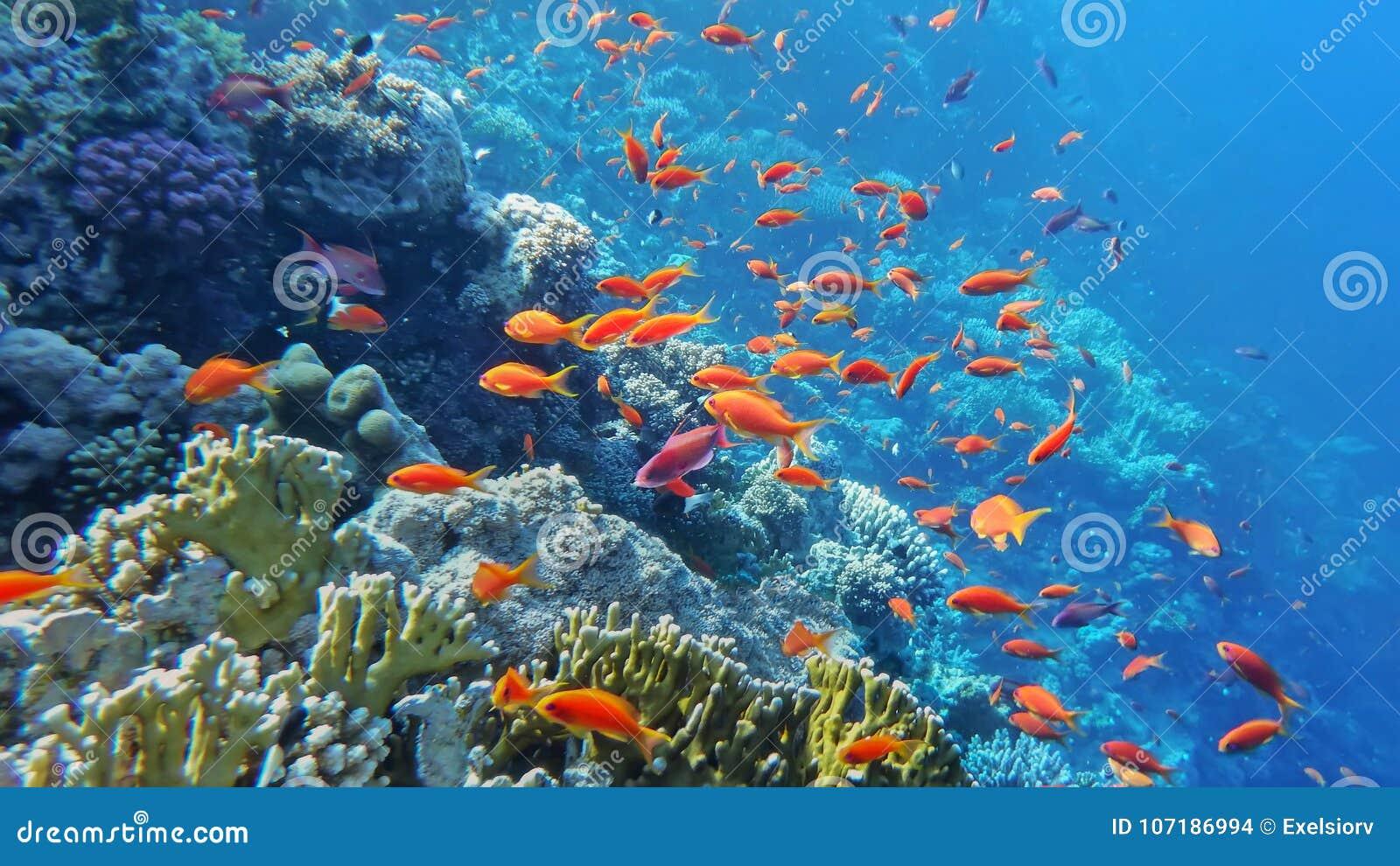 Il mondo subacqueo del mare