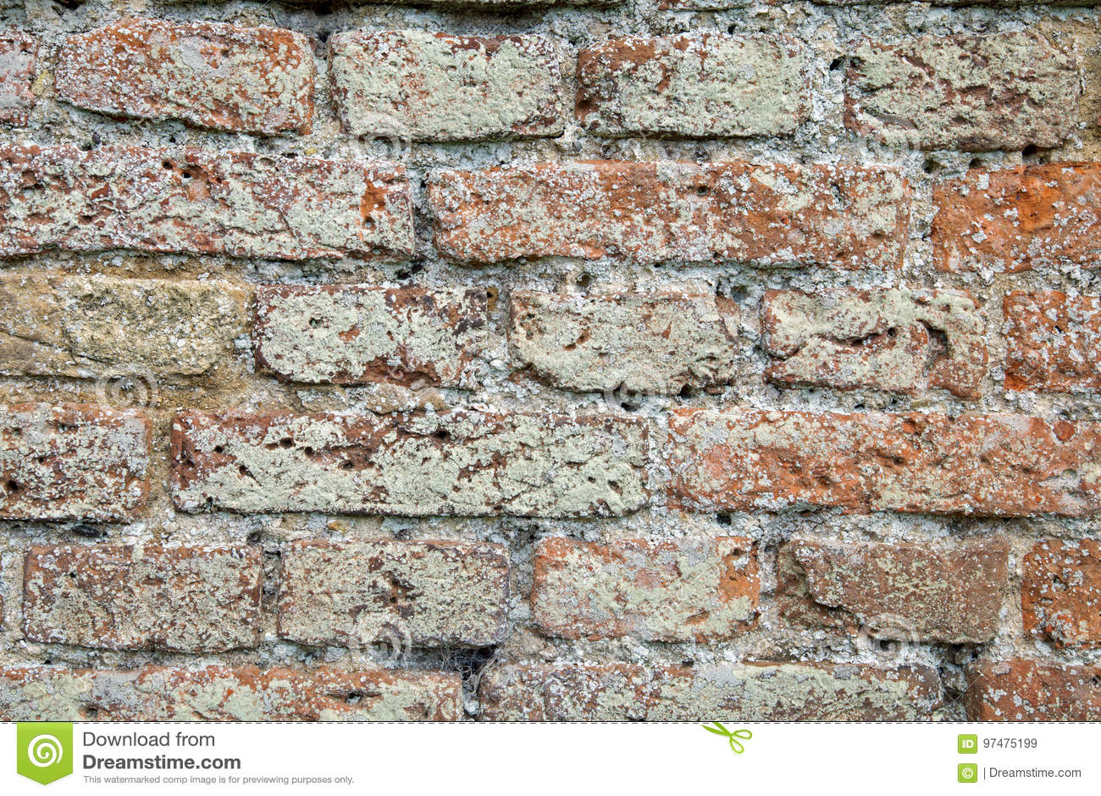 Il muschio ed il lichene hanno riguardato la struttura del muro di mattoni
