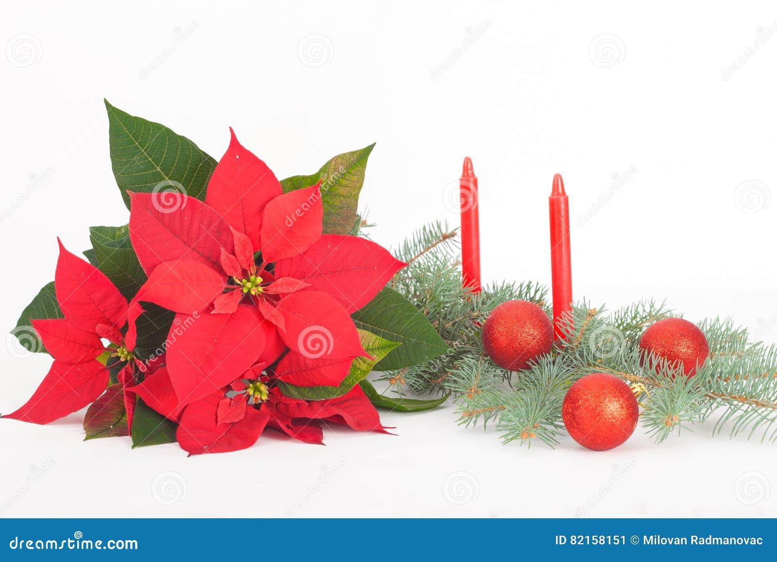 Il natale fiorisce con le palle e le candele rosse della for Antifurto con le palle
