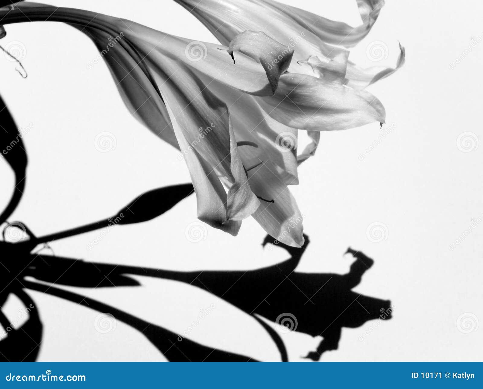 Il nero & bianco