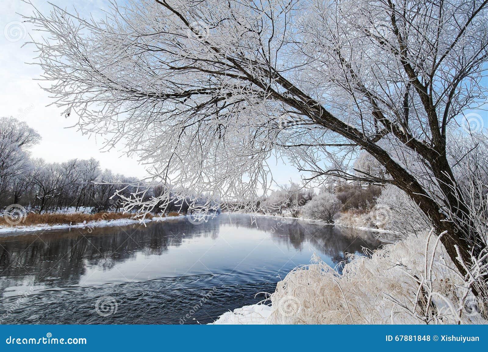 Il paesaggio del fiume e degli alberi di inverno