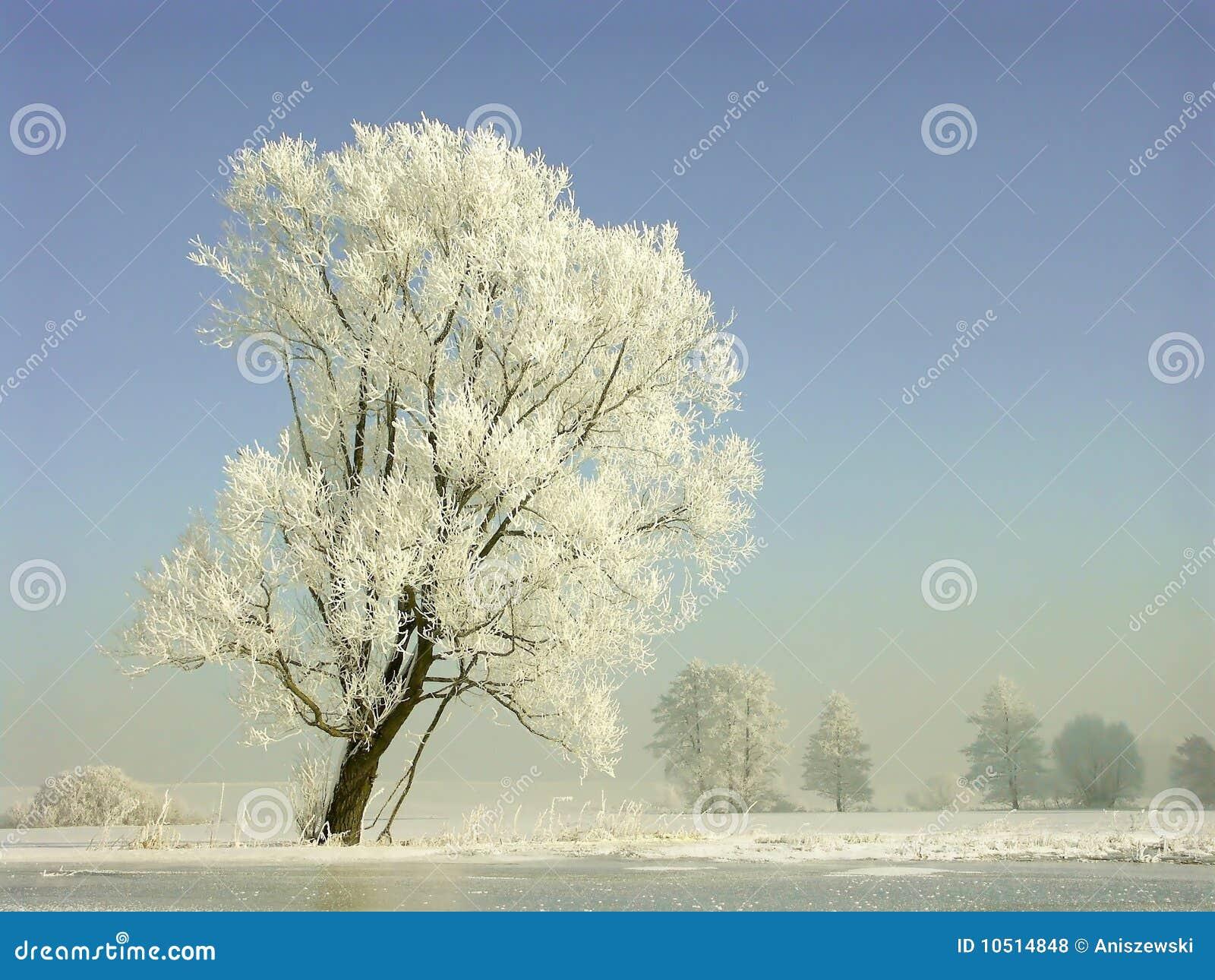 Il paesaggio di inverno gelo ha coperto gli alberi - Animali in inverno clipart ...