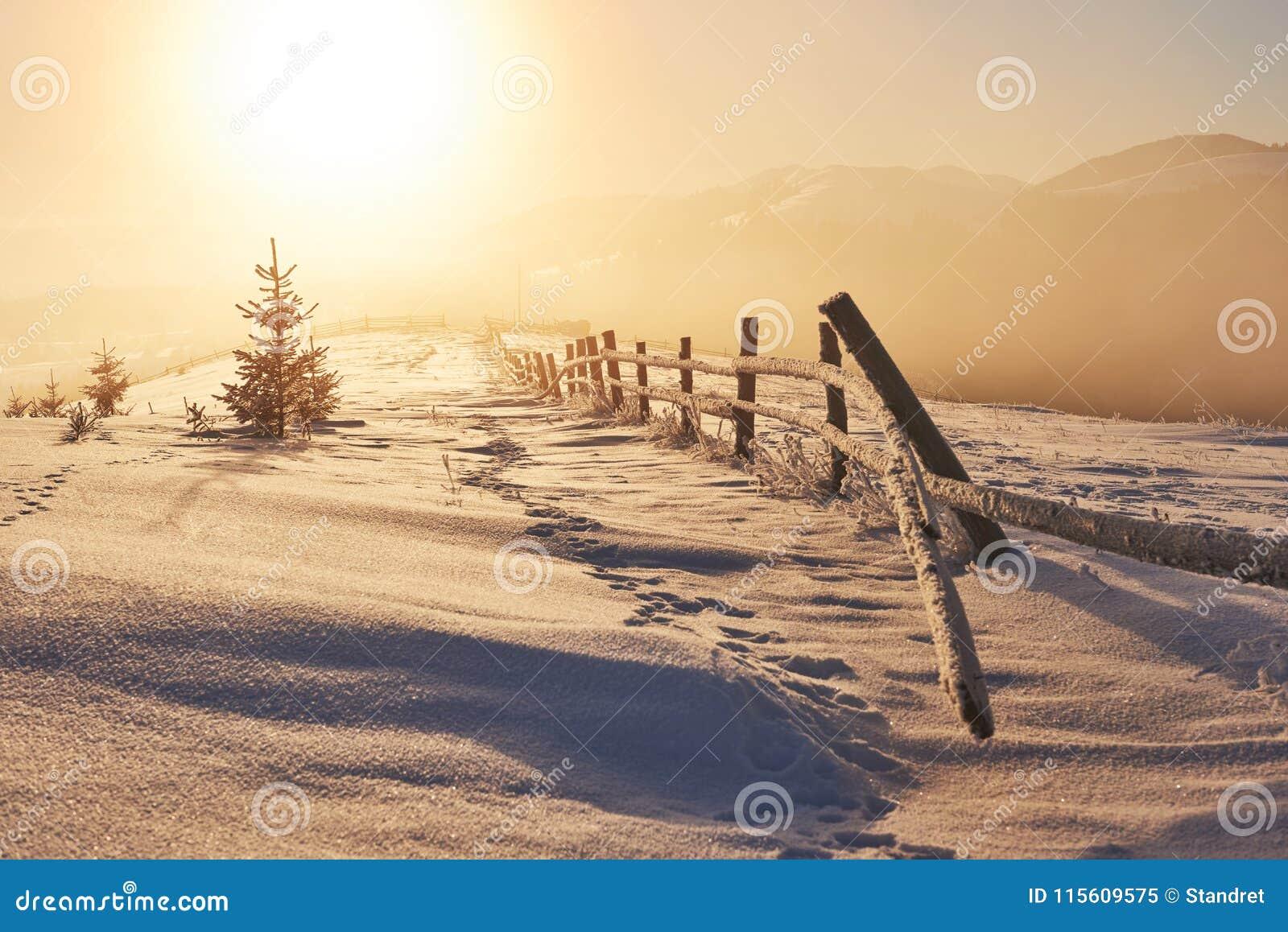 Il paesaggio misterioso dell inverno è montagne maestose nell inverno Tramonto fantastico Cartolina di cortesia della foto carpat