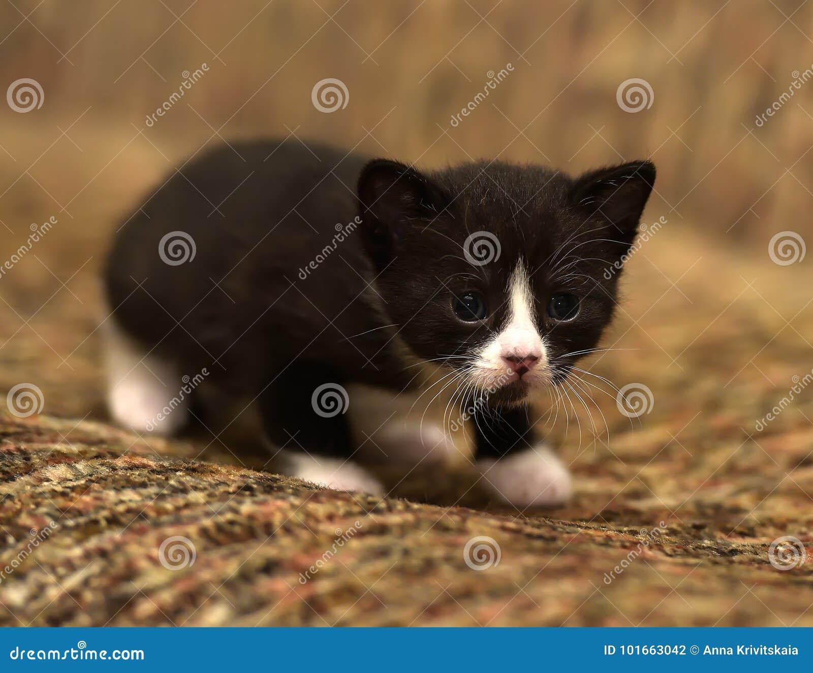 Il Piccolo Nero Divertente Con Un Gattino Bianco Fotografia Stock