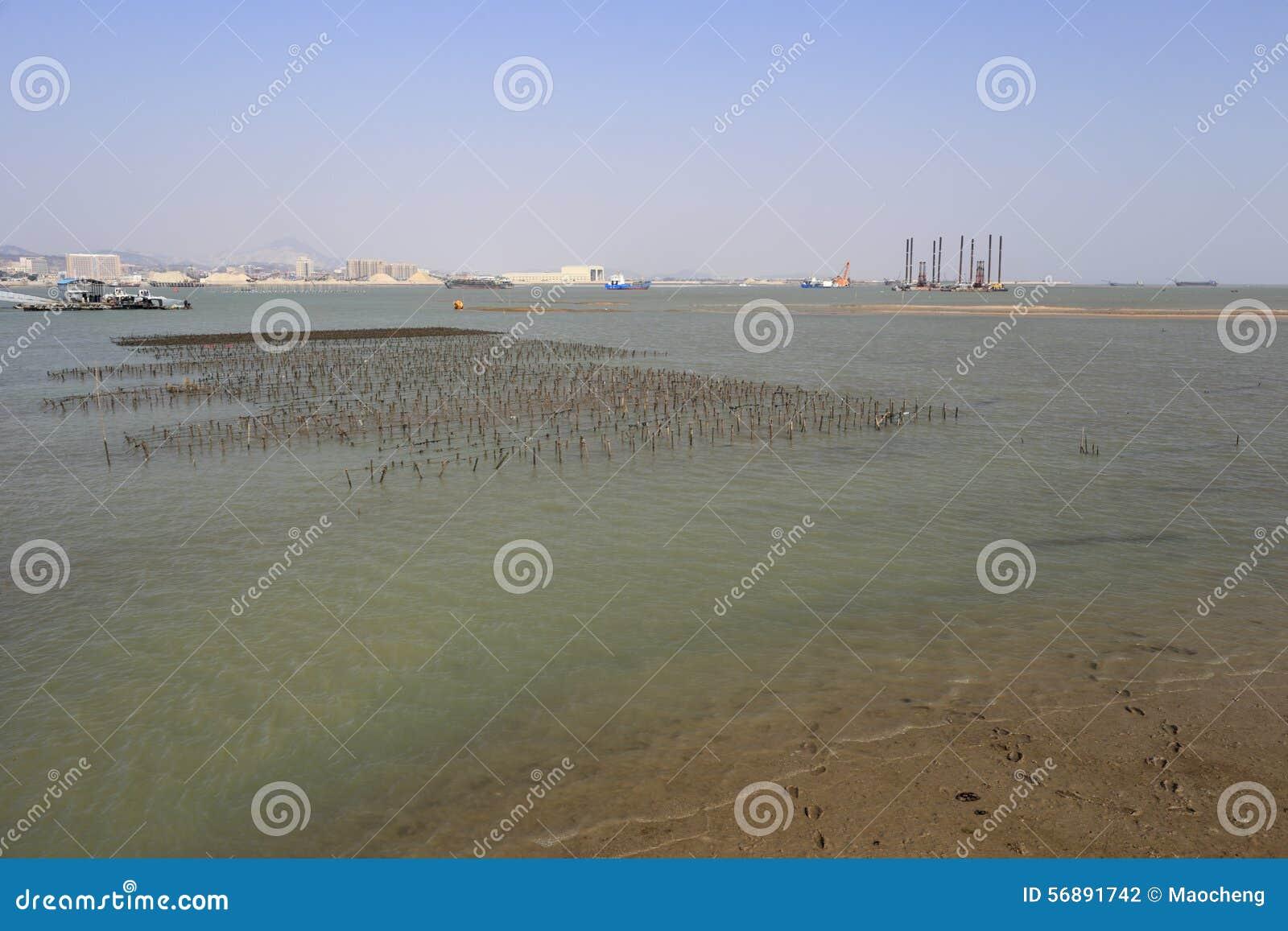 Il Porphyra sistema alla spiaggia dell isola del xiaodeng, porcellana