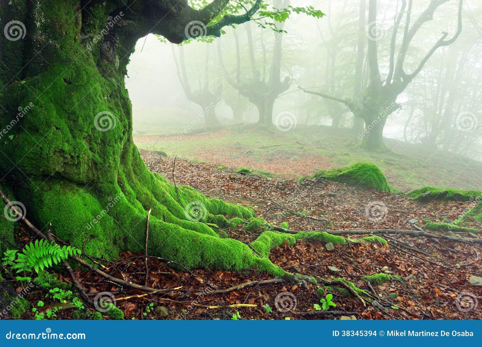 Il primo piano dell albero si pianta con muschio sulla foresta
