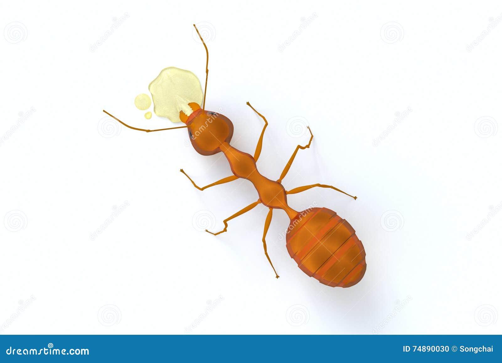 Il punto di vista superiore di una formica arancio che mangia lo sciroppo