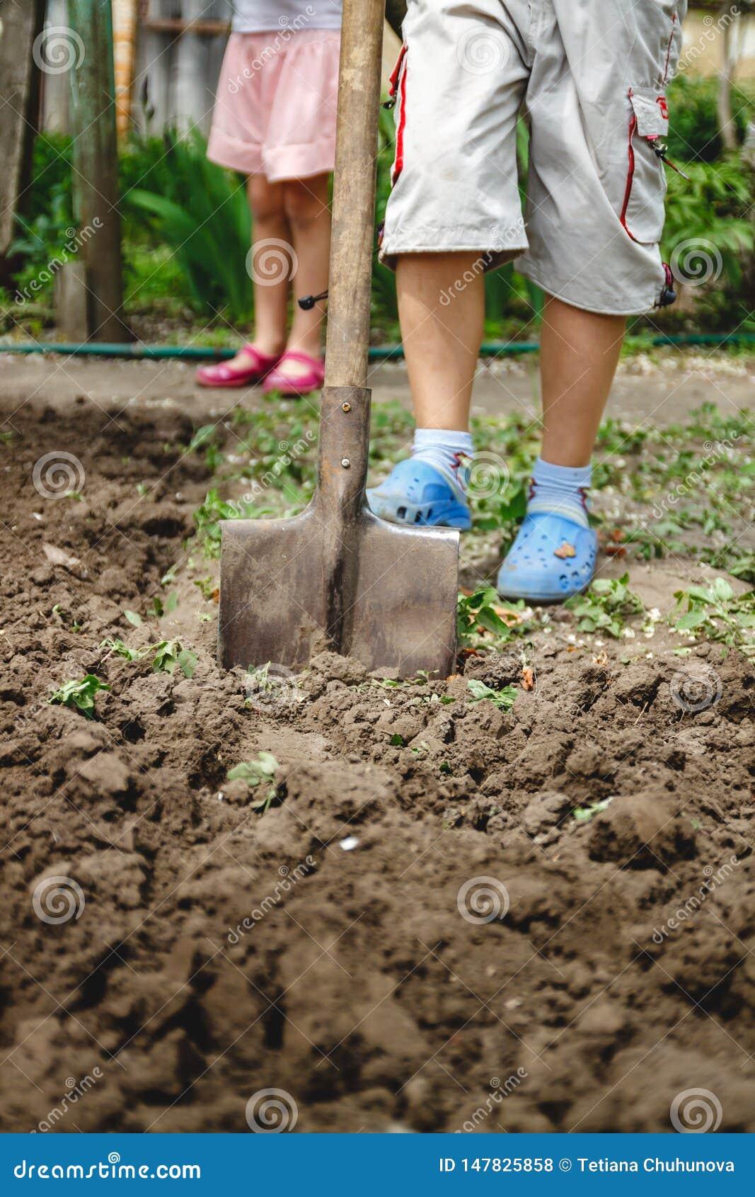 Il ragazzo sta scavando un orto con una grande pala Il concetto degli adulti d aiuto e lavoro dall infanzia