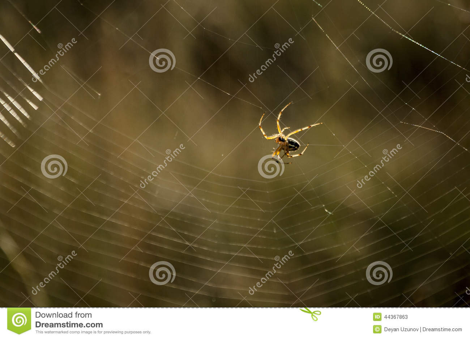 Il ragno ha filato il suo web
