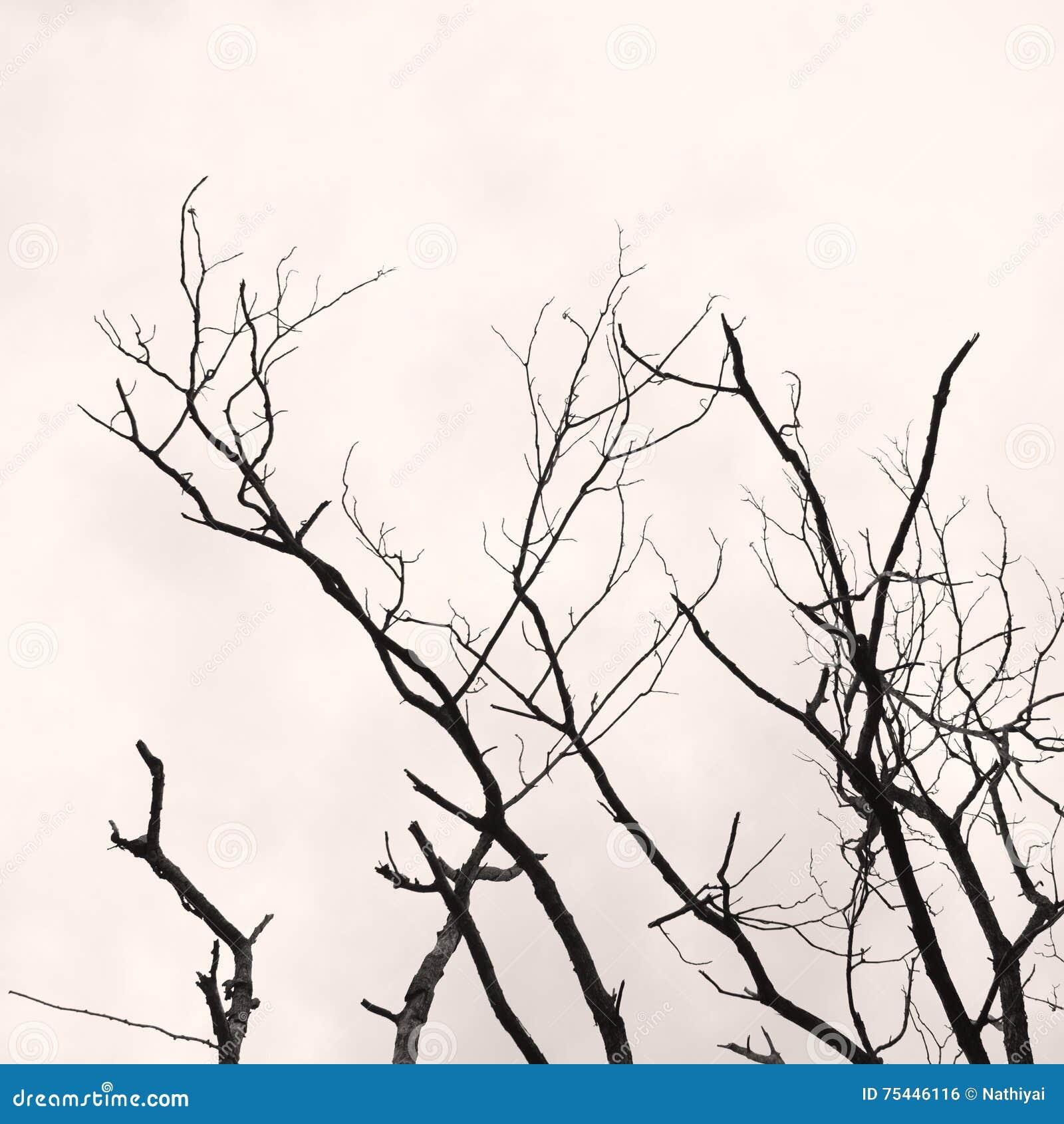 Il ramo di albero senza c è ne va