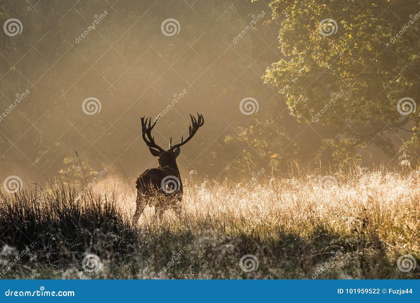 Il re della foresta
