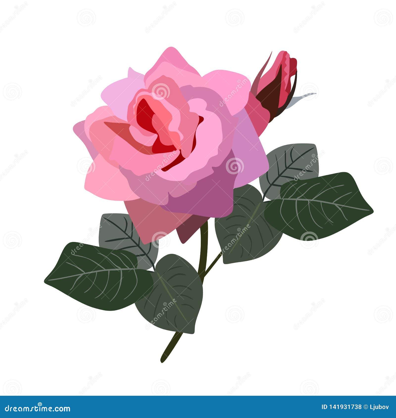 Il rosa è aumentato con il germoglio e le foglie isolati su fondo bianco nello stile piano Illustrazione di vettore