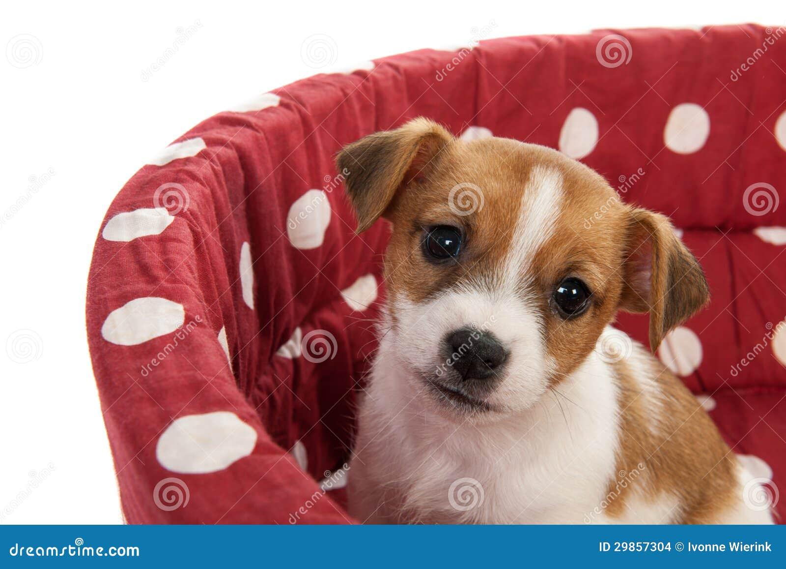 Letto dell animale domestico macchiato rosso con il piccolo cucciolo