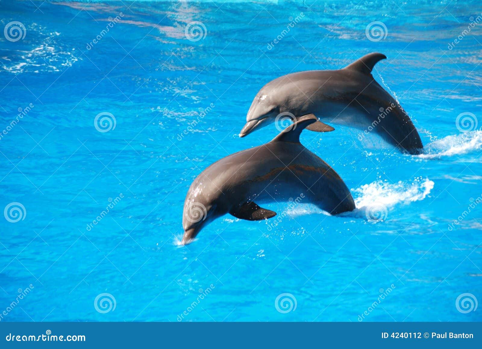 Il salto del delfino