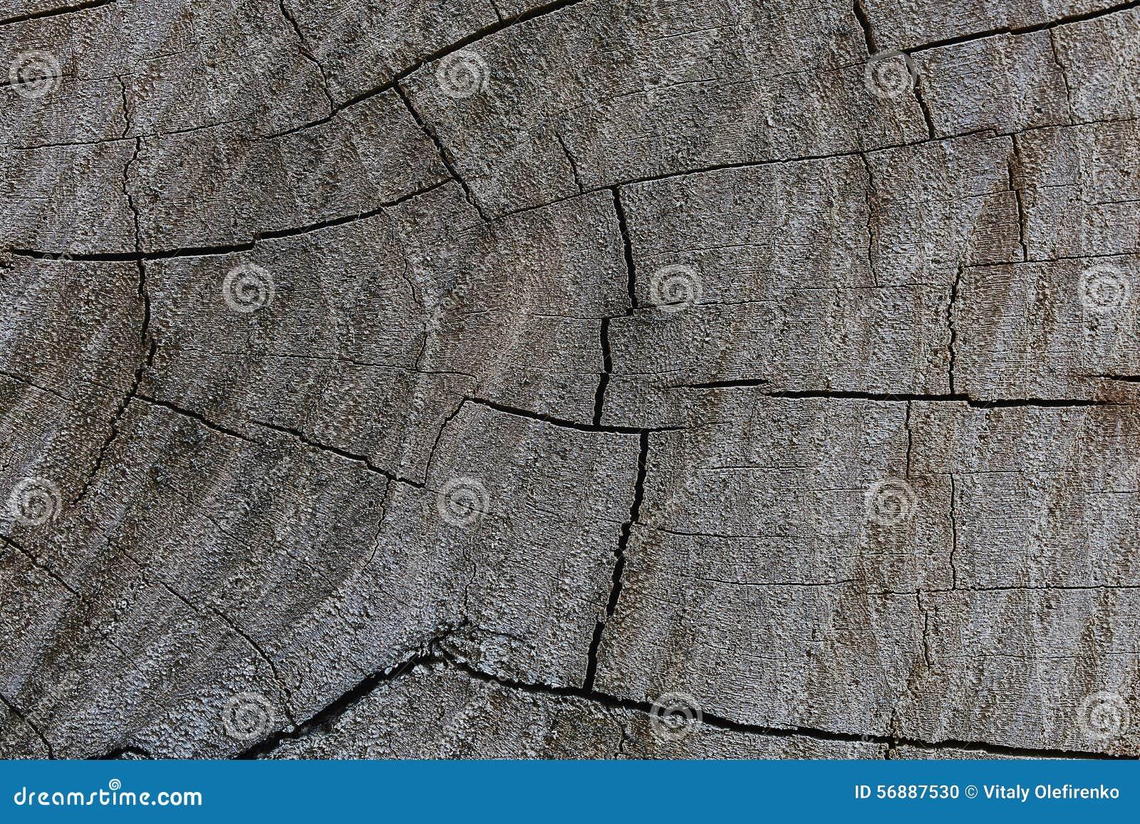 Il taglio di un albero