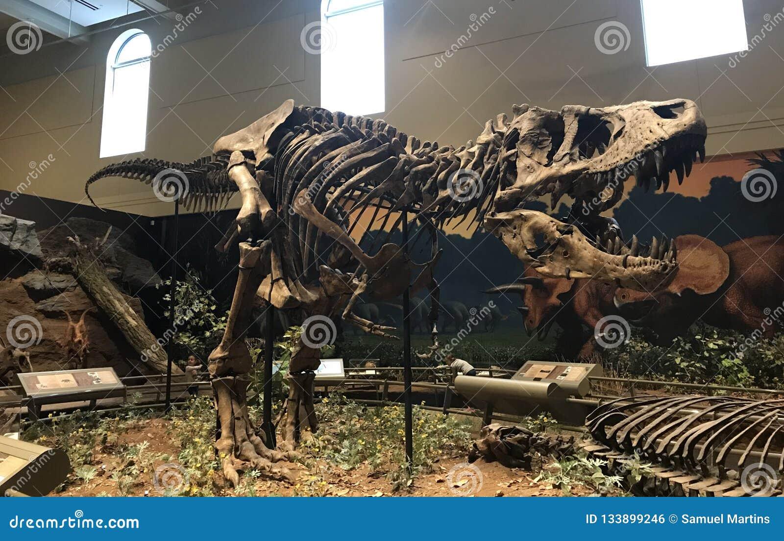 Il tirannosauro mai visto Rex ha scoperto nel mondo
