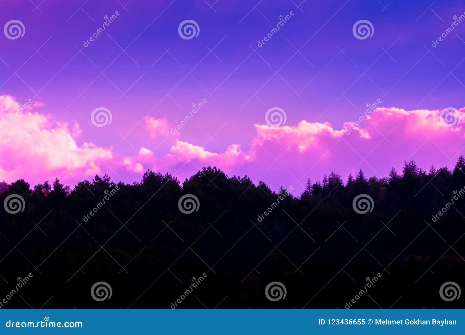 Il tramonto si appanna la foto con la siluetta dell abetaia