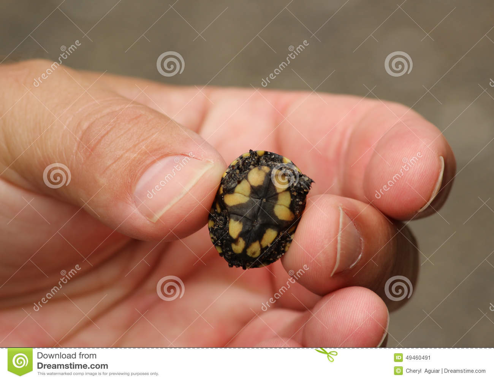 Il Turle minuscolo