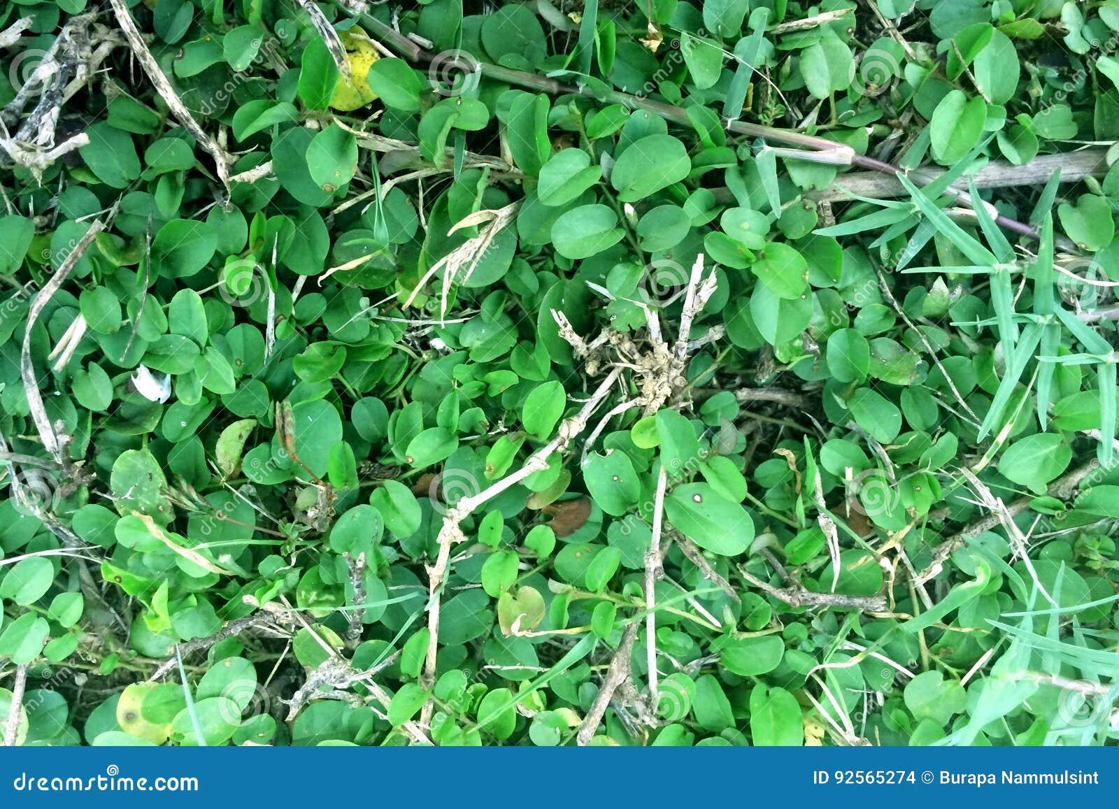 Il verde lascia il reticolo