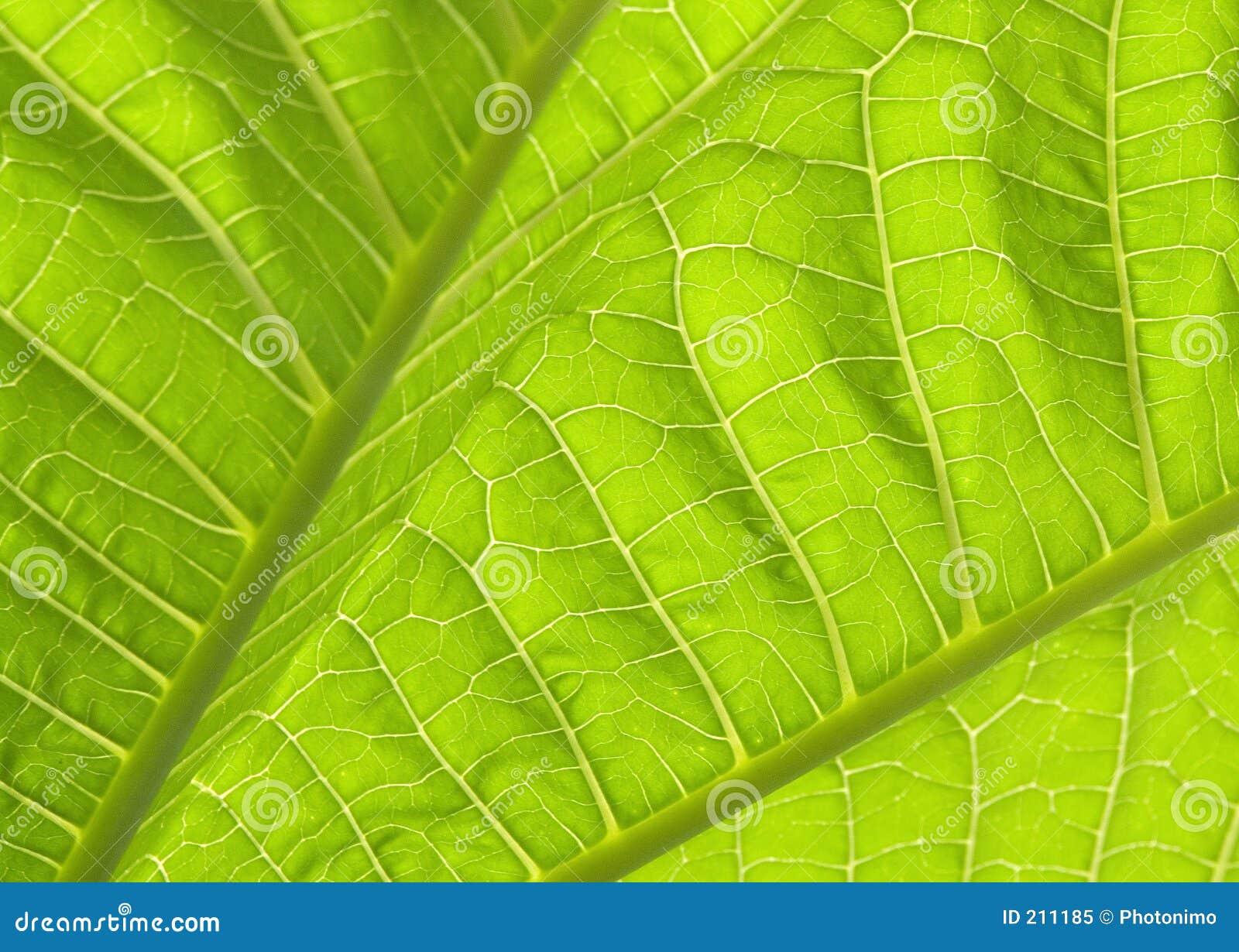 Il verde lascia la I