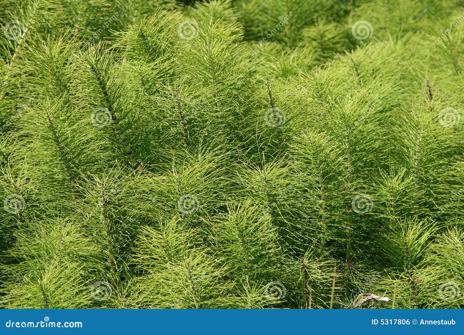 Download Il Verde Lascia La Priorità Bassa Fotografia Stock - Immagine di foglio, gruppo: 5317806