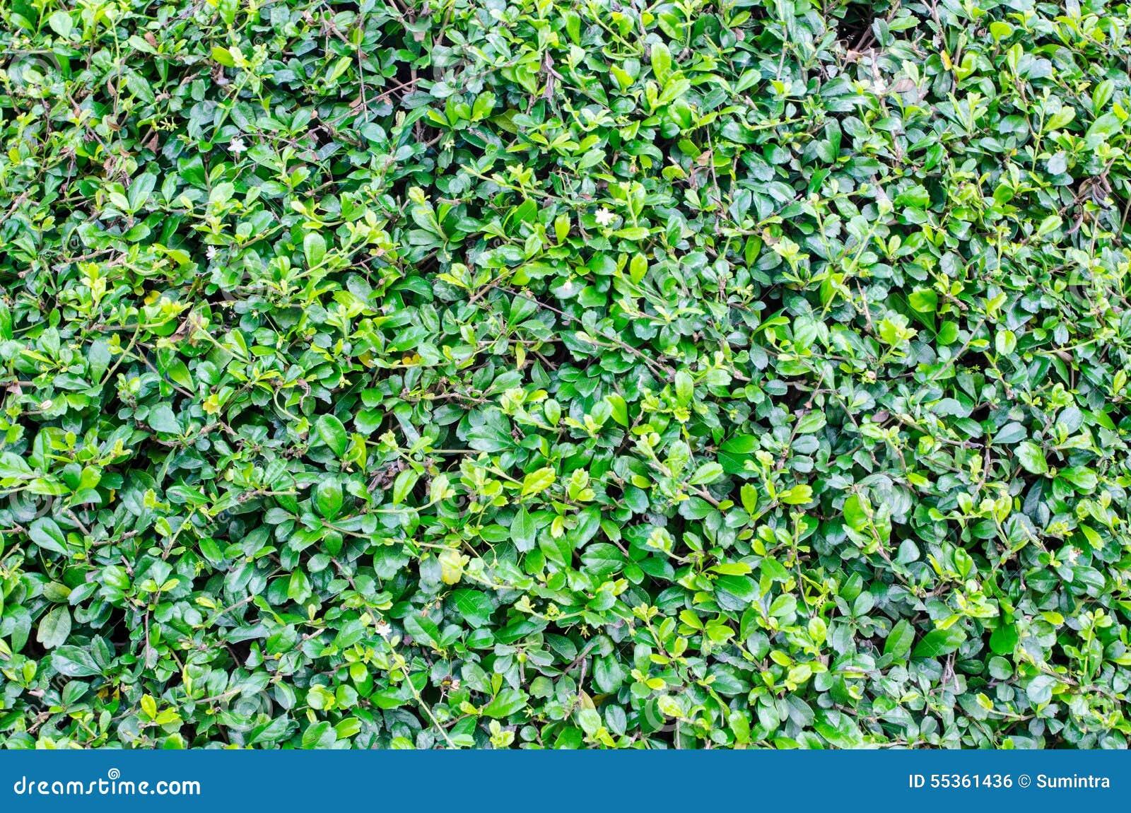 Il verde lascia la priorità bassa