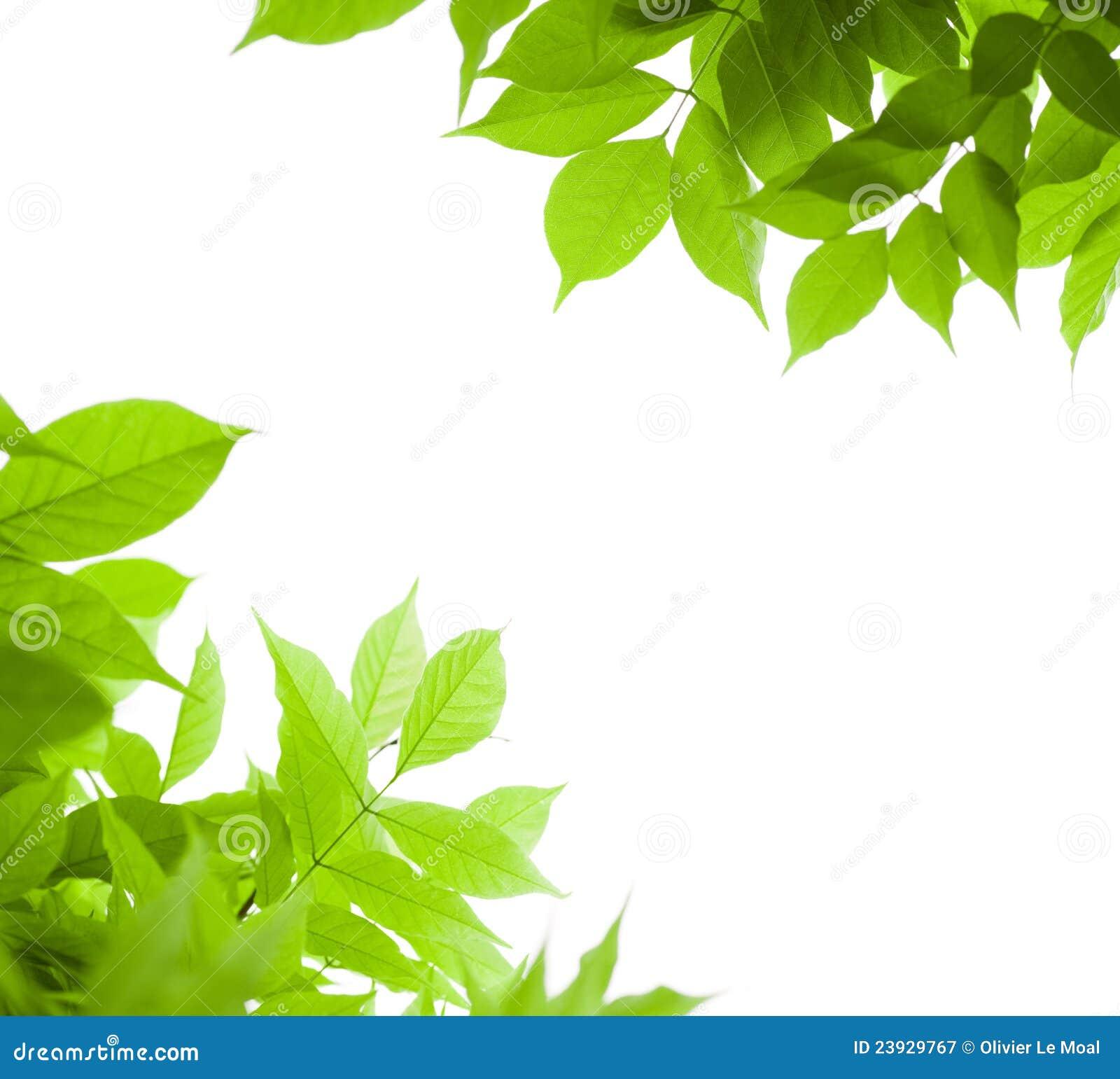 Il verde lascia la priorità bassa della natura del bordo