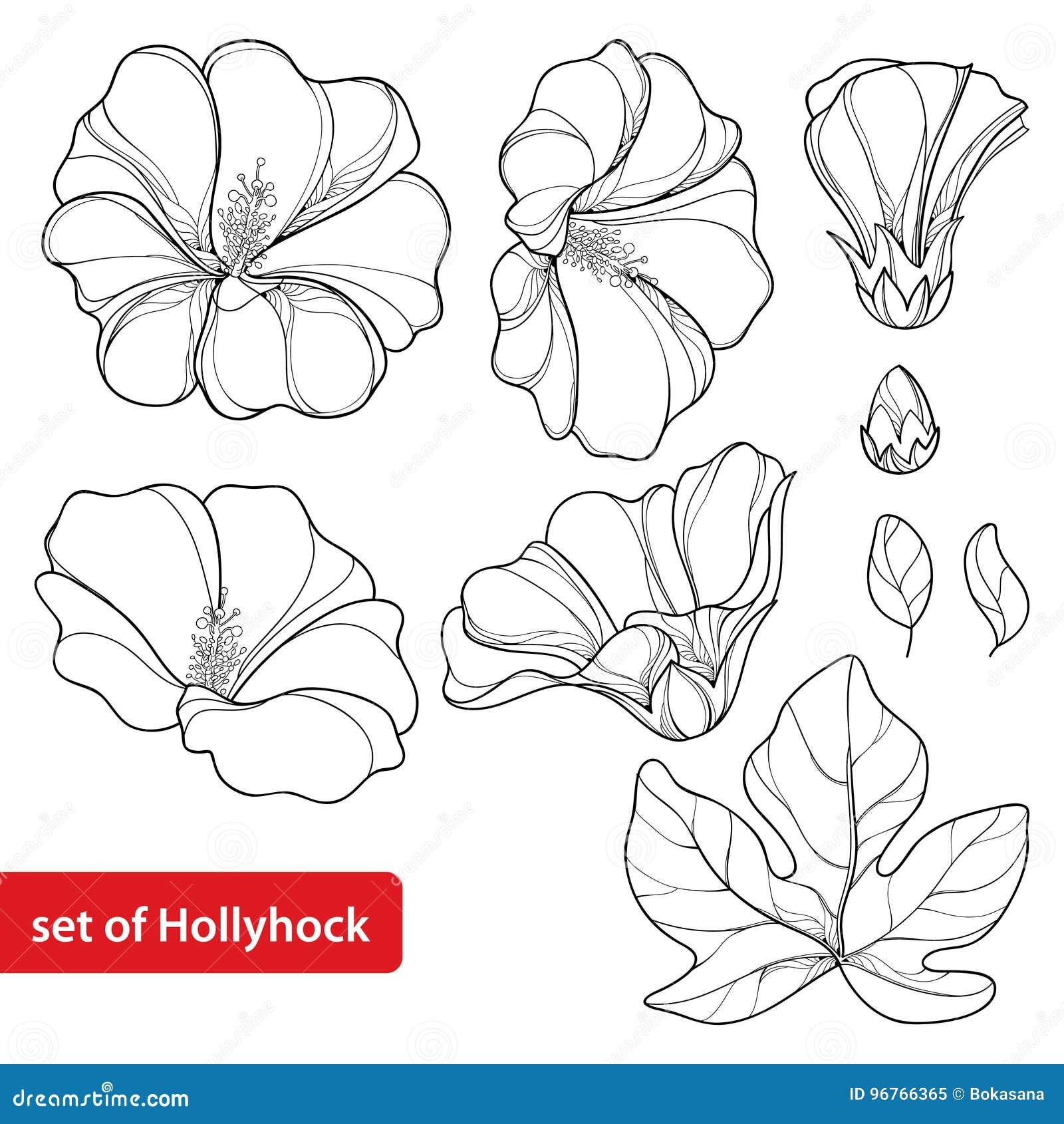 Il vettore ha messo con il rosea del Alcea o il fiore della malvarosa