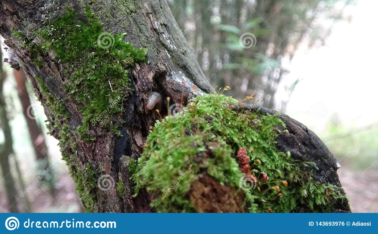 Il y a un champignon sur un bois mort