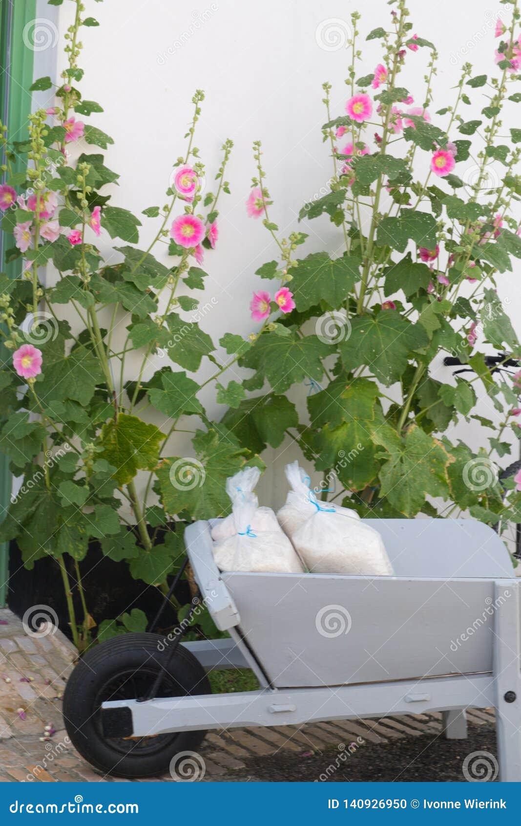 Ile met en sac de re le sel et des roses trémière