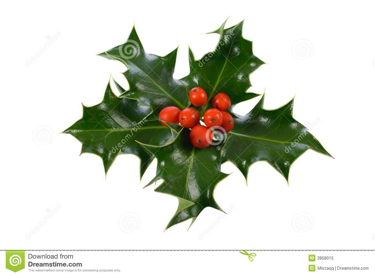 Ilex holly christmas decoration stock image image 3858015 for Castorama deco de noel