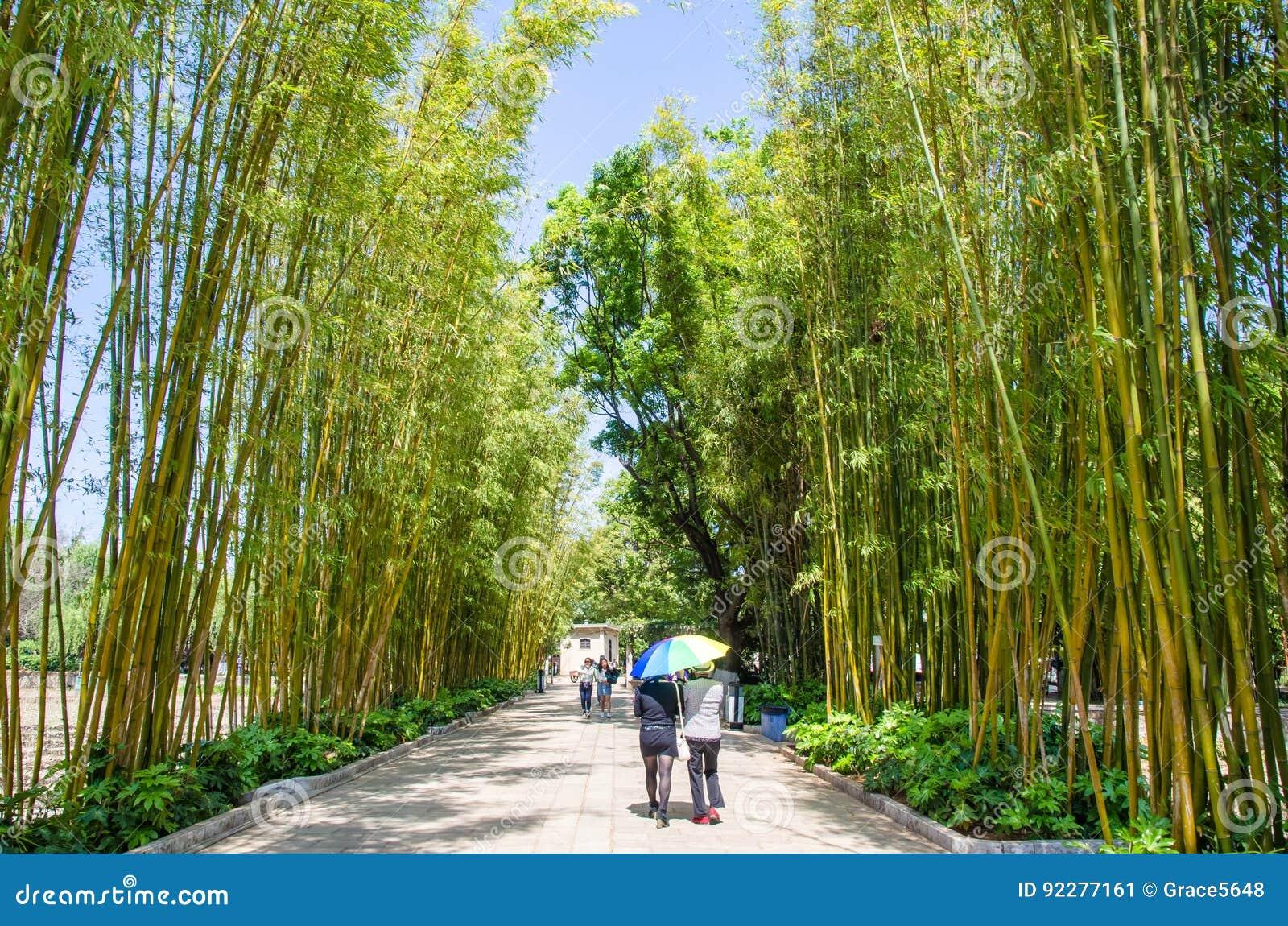 Ilha de bambu do bosque que é uma da área cênico no parque verde Cui Hu Park do lago