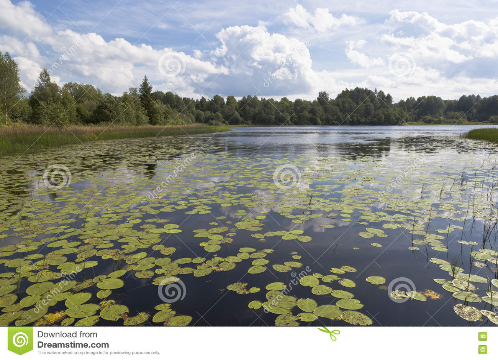 Ilinskoe lake in the national park Russian North in the Kirillov district, Vologda region, Russia