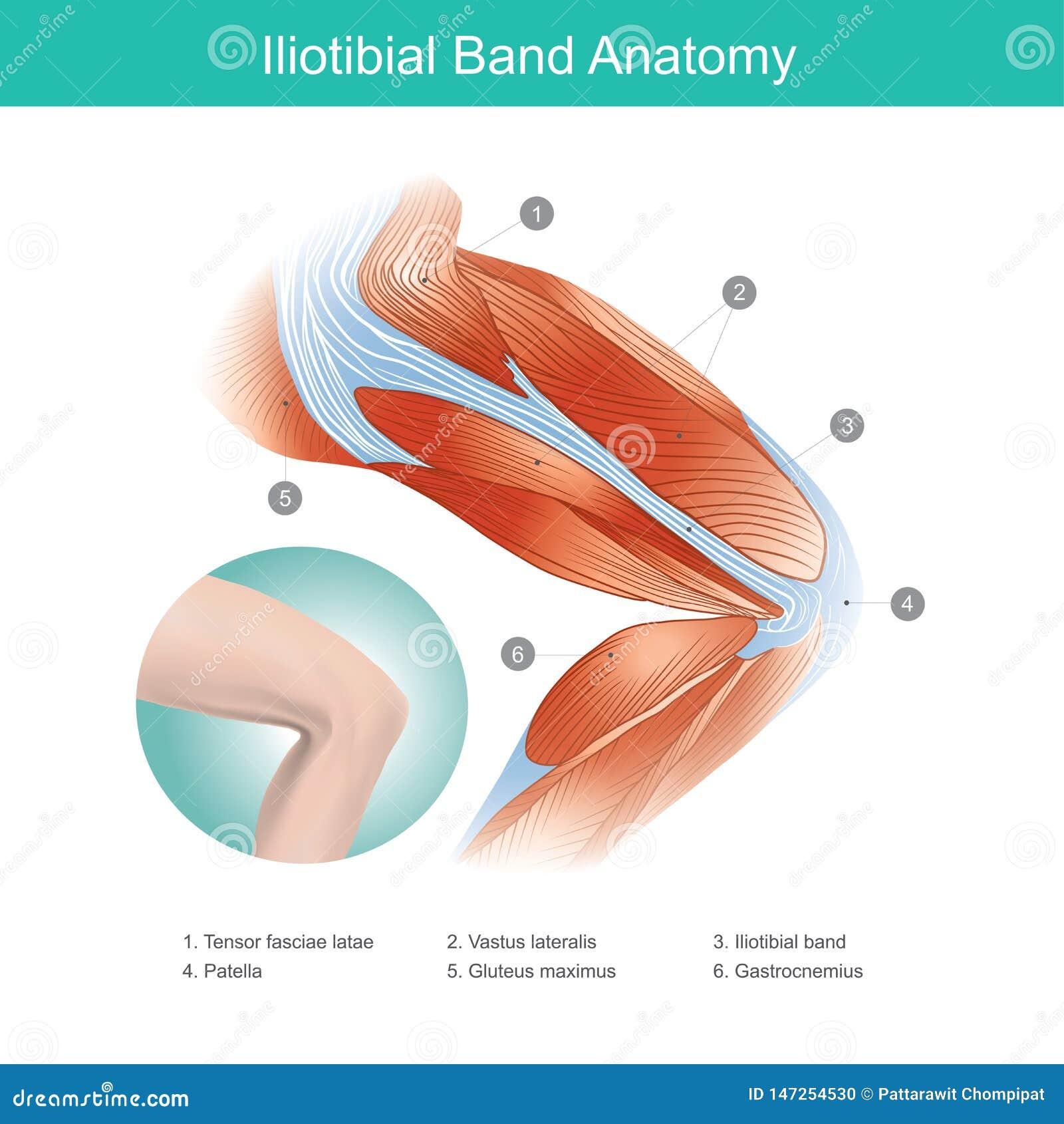 Iliotibial Band-Anatomie Abbildung