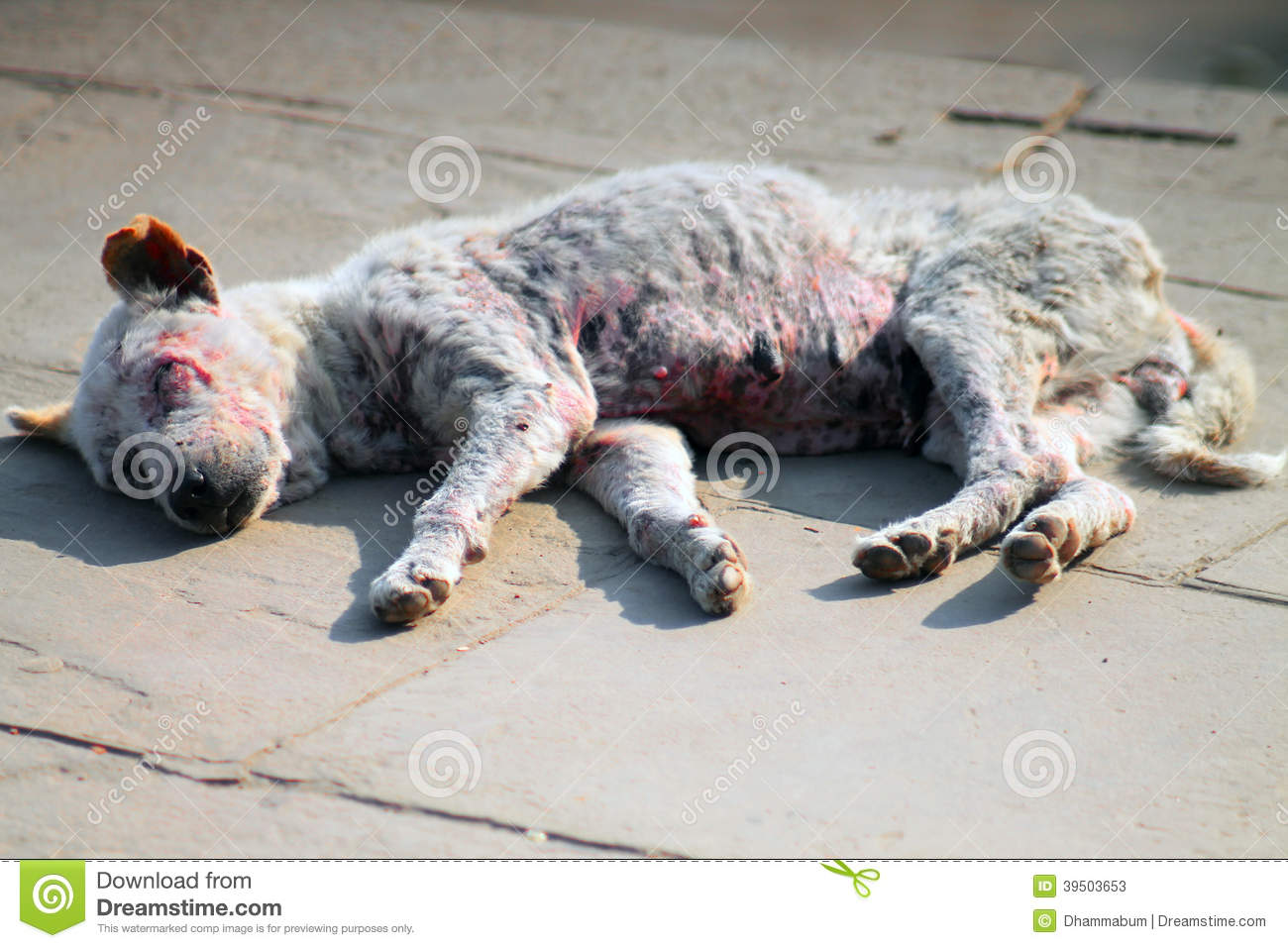 Ill dying dog in India